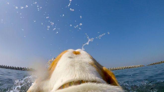 海で泳ぐ犬