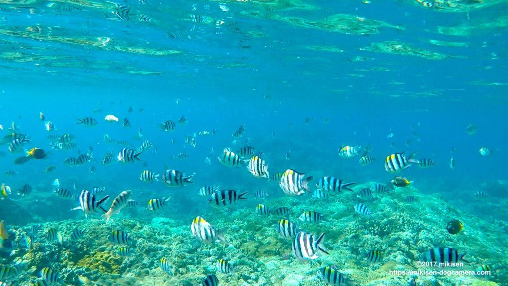 ゴープロで撮った大量の熱帯魚の写真
