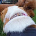 犬と遊ぶ写真