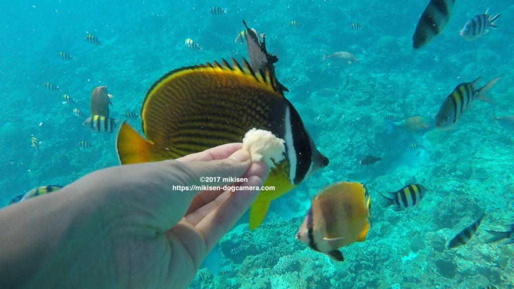 手に近く熱帯魚の写真