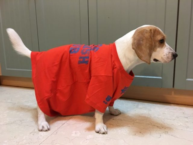 ぶかぶかの服の犬の写真