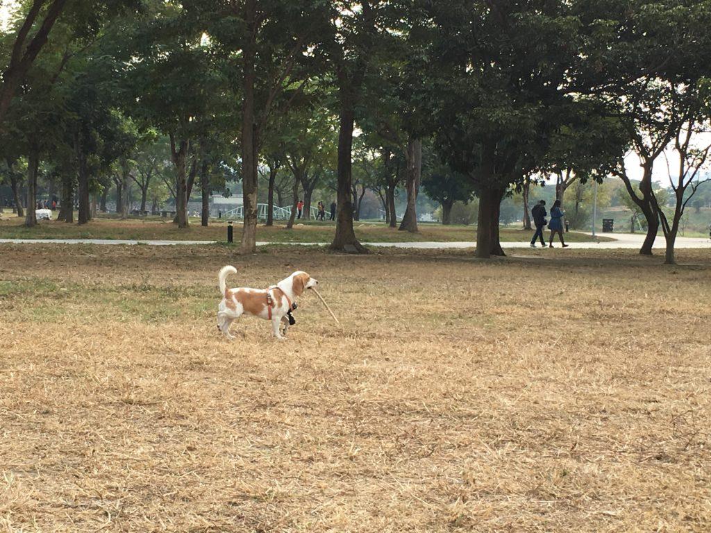 ゴープロをつけたまま遊ぶ犬の写真