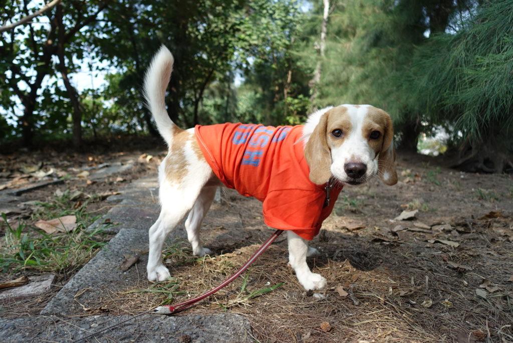 完成した服を着た犬の写真