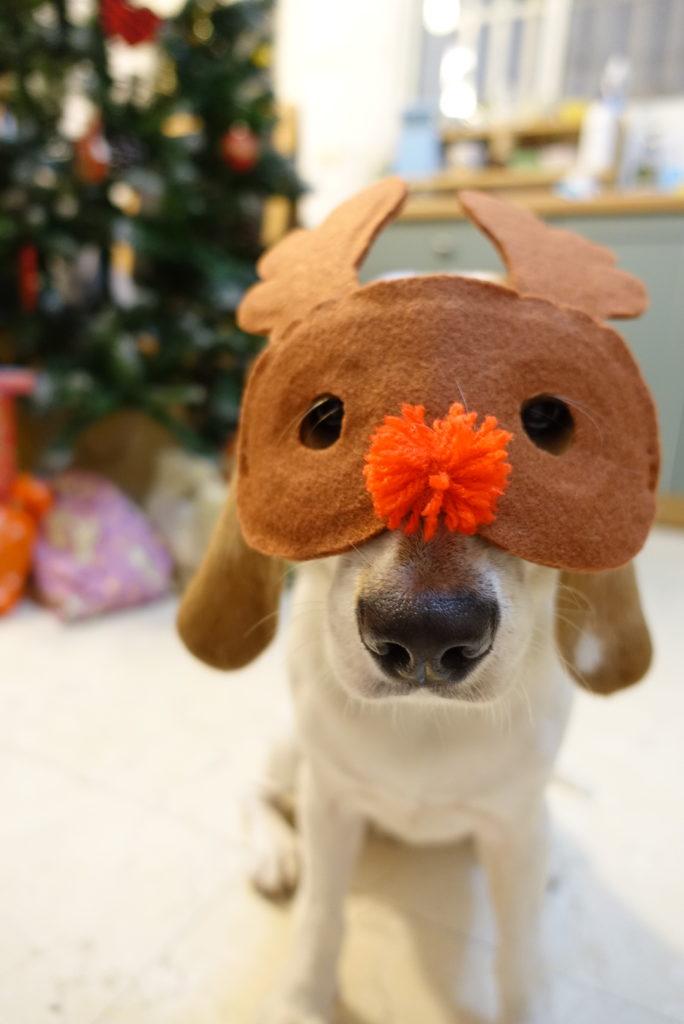 トナカイメガネをつけた犬