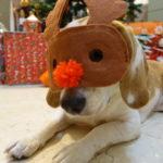 トナカイのマスクをしたビーグル犬