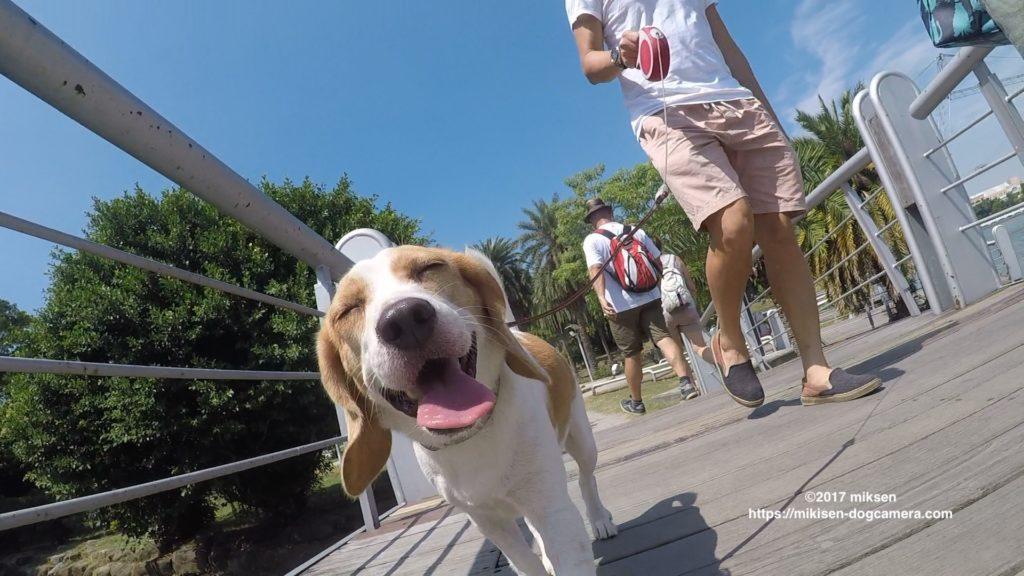 散歩を喜ぶ犬