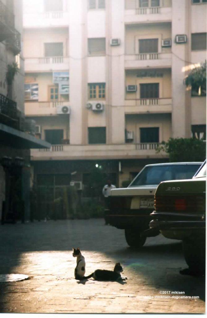 エジプトで撮った猫の写真