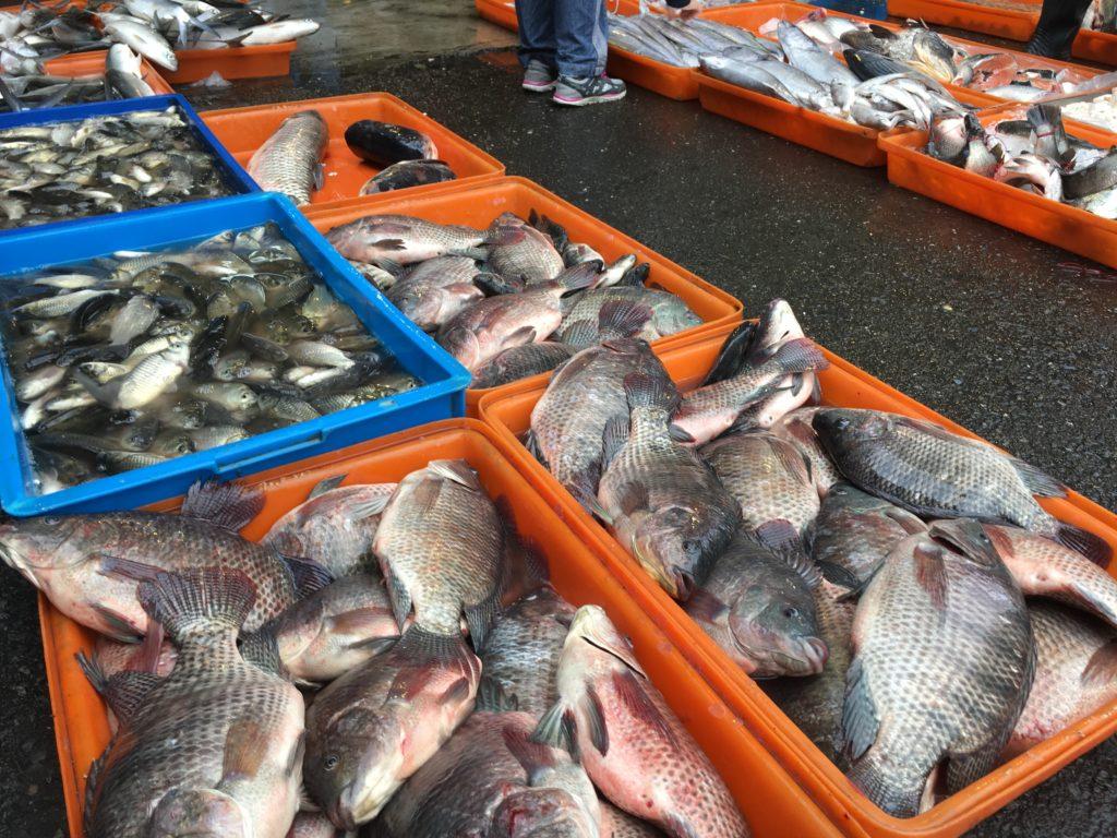 朝市で売られている魚の写真