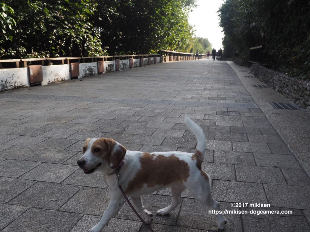 坂の下の犬