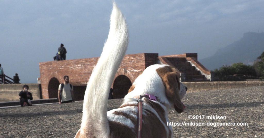 旗後砲台と犬