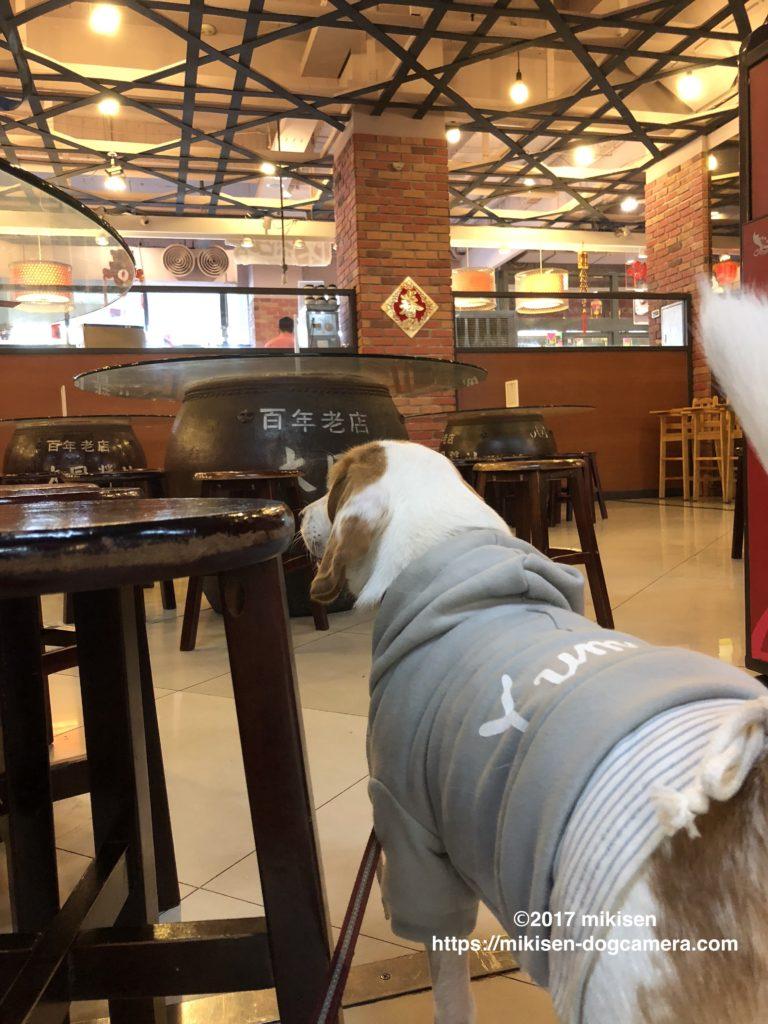 椅子の横にいる犬