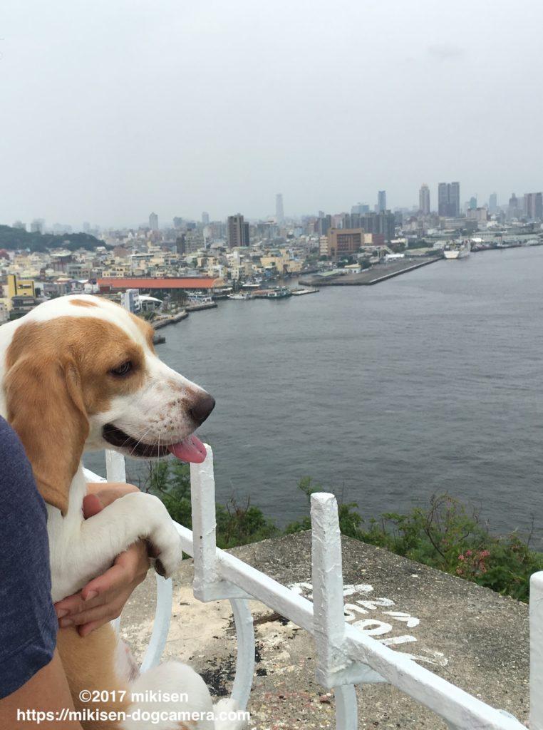西子湾を眺める犬