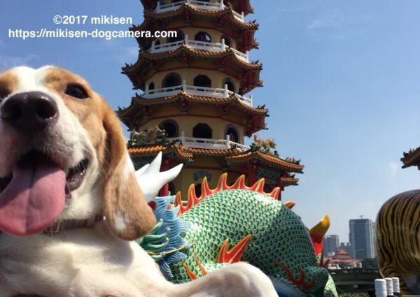 蓮池潭と犬
