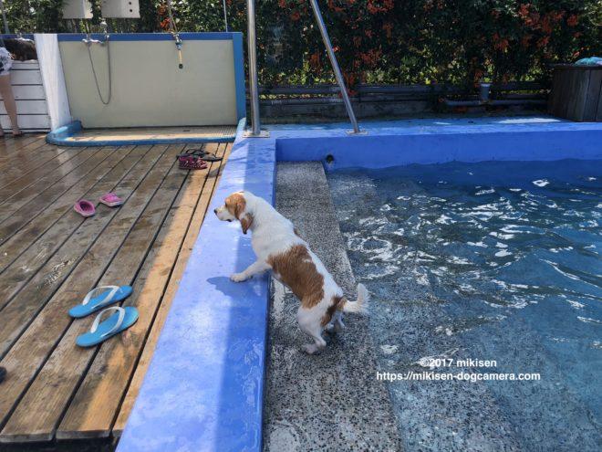 プールから出る犬