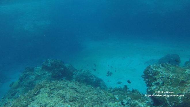蘭嶼シュノーケリング
