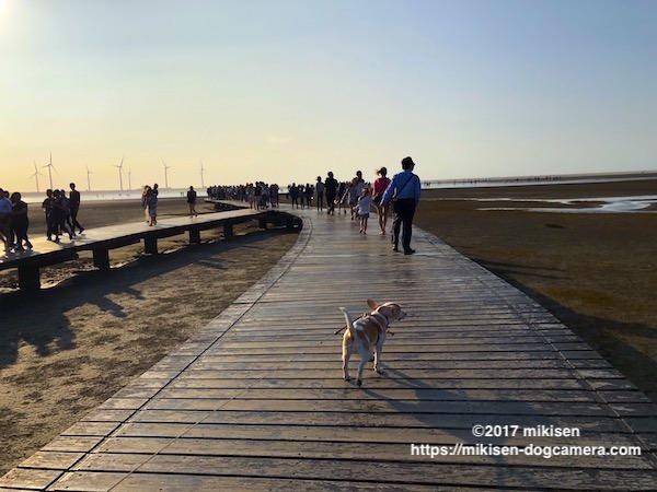 桟橋をいく犬
