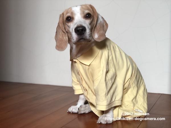 ブカブカの服を着た犬