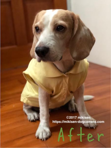 犬服 リメイク