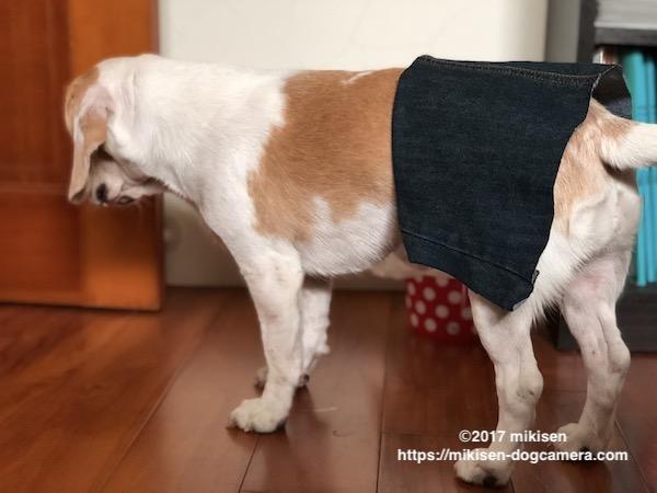 ワンコのスカート