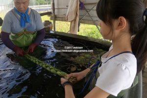 水蓮菜洗い
