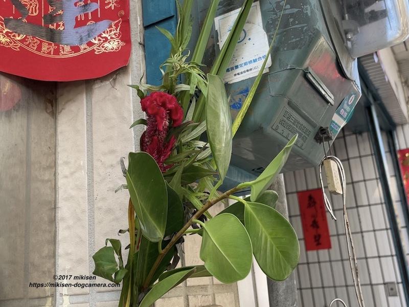 端午節の花